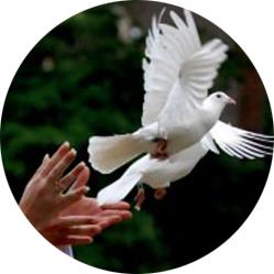 dove-release